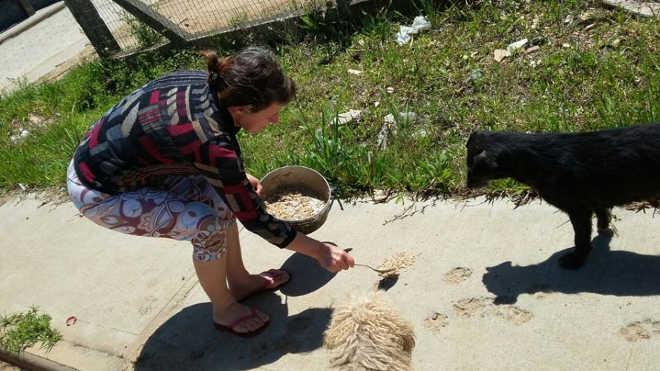 Animais contam com solidariedade na rua em Içara, SC