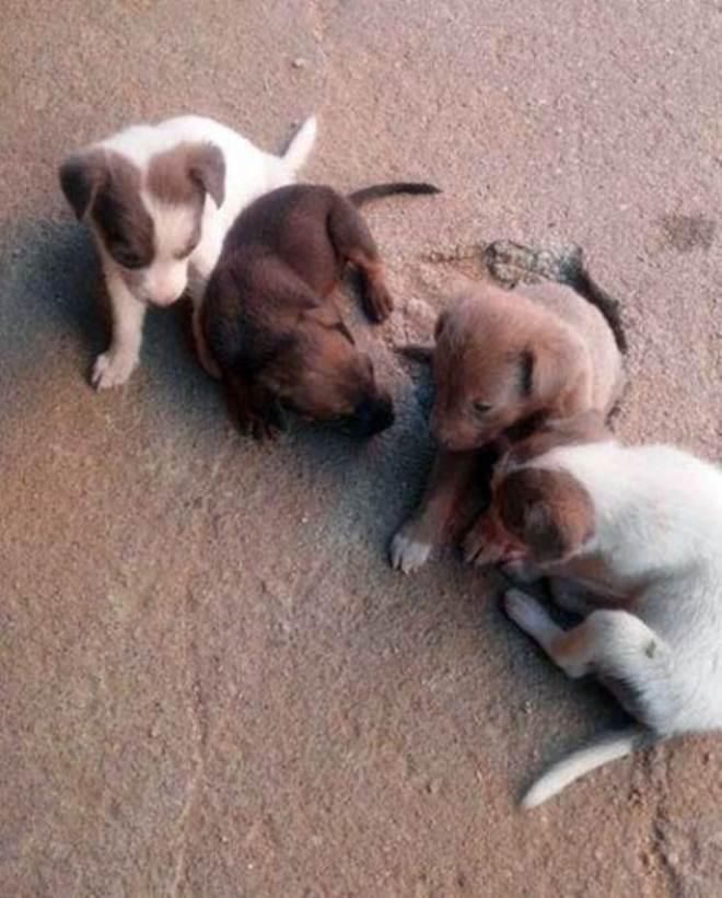 IPTU com desconto para adoção de animais