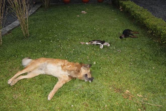 Cachorros são encontrados mortos no bairro Pinheiros, em Otacílio Costa, SC