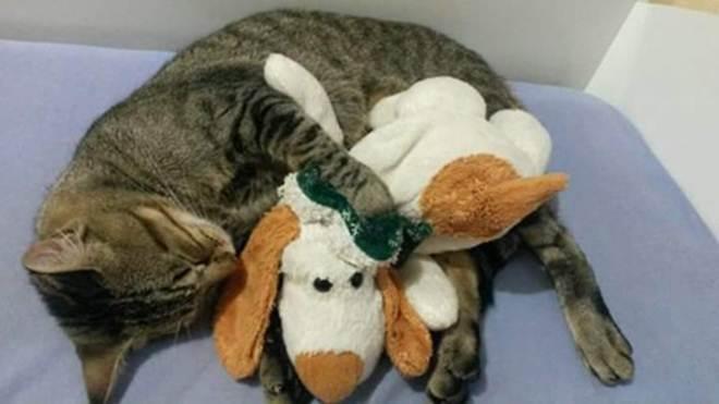 Não resistiu : Tutora de gato que levou tiro pede justiça