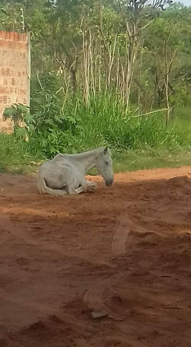 Após denúncia, cavalo abandonado é resgatado pelo CCZ em Bauru,SP