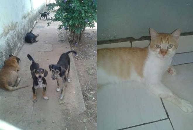 Animais estão para adoção no Centro de Zoonose de Bauru, SP