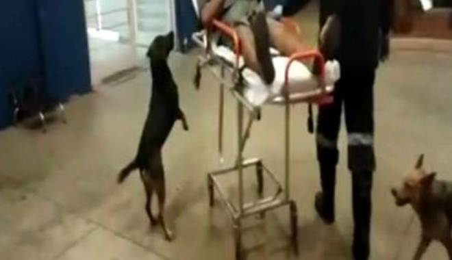 Cães seguem ambulância até hospital após tutor ser socorrido em Botucatu, SP