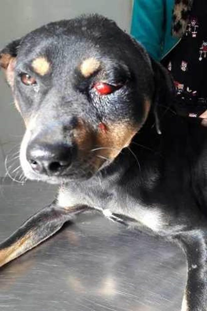 Cachorro é socorrido após ser agredido com barra de ferro em Cachoeira Paulista, SP