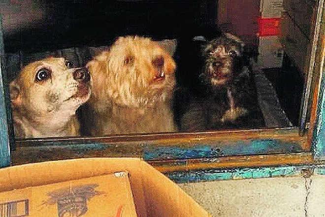 Cães confinados são resgatados em Hortolândia, SP