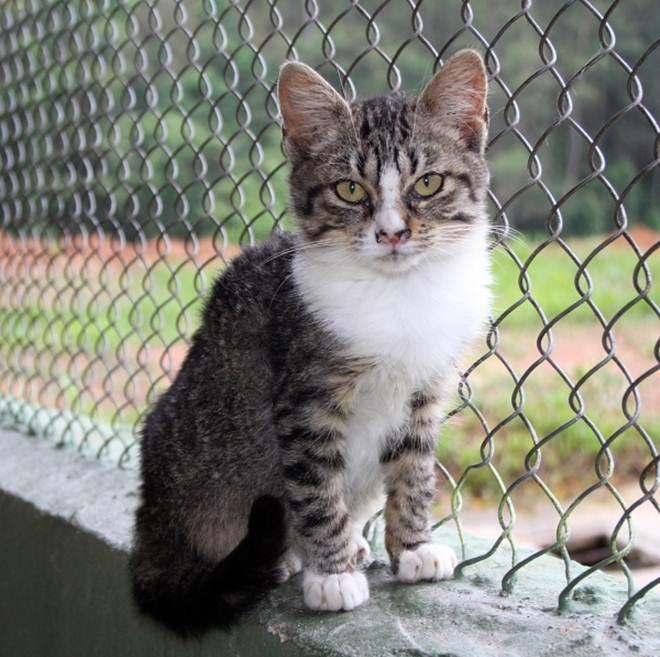 Zoonoses de Itapevi (SP) oferece esterilização gratuita e adoção de cães e gatos