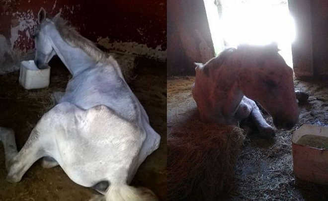 Cavalo morre de fome em 'spa'; Tutor não foi encontrado