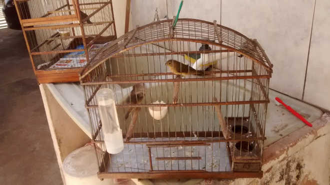 Polícia Militar Ambiental resgata pássaros em Marília, SP