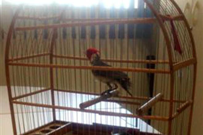 Homem é flagrado transportando aves em recipiente plástico em Ourinhos, SP
