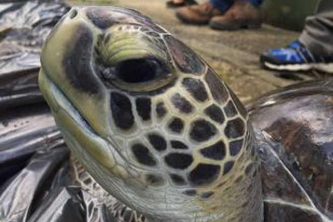 Sete animais marinhos são localizados pelo Gremar em um único dia em Santos, SP