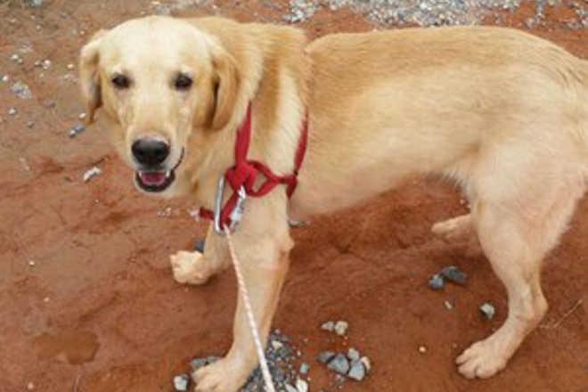 Cachorro é resgatado de poço desativado em Piedade, SP