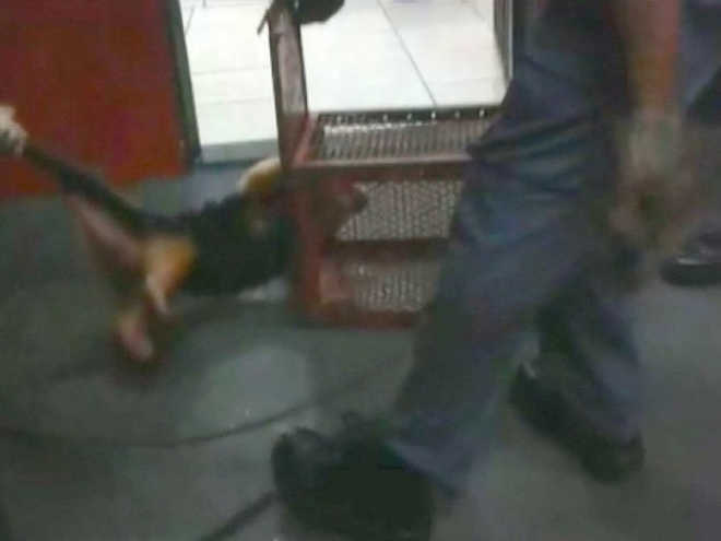 Tamanduá é resgatado após entrar em lanchonete de Ribeirão Preto, SP