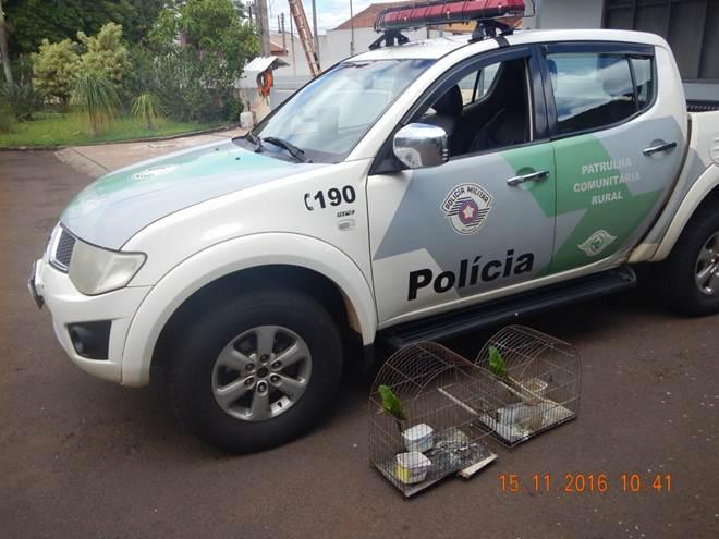 Polícia Ambiental resgata pássaros mantidos ilegalmente em  cativeiro em Salto Grande, SP