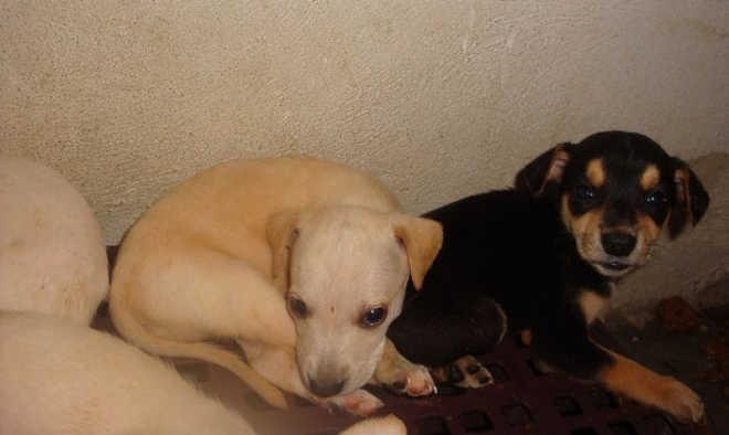 Centro de Controle de Zoonoses de São Sebastião (SP) tem cães e gatos para adoção