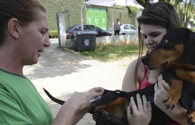 Vacinação de cães e gatos contra a raiva continua no canil municipal em Sorocaba, SP