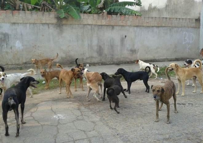 Abandono de animais em Suzano (SP) ainda é problema