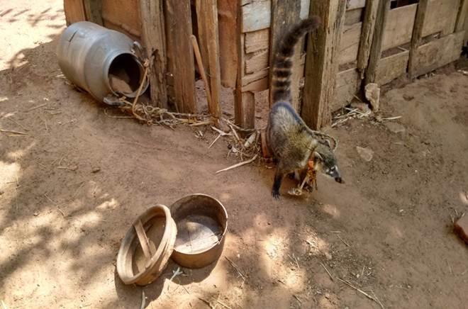 Polícia Ambiental resgata animais em condições precárias em Tupã, SP