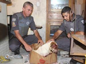 Homem espanca cachorro que comeu passarinho e é preso em Eldorado, SP