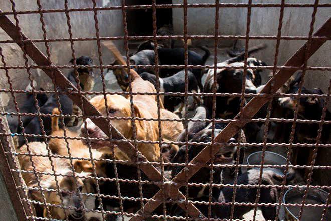 Moradores denunciam maus-tratos a cães em Ribeirão Pires, SP