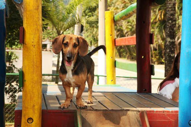 Já está aberto o agendamento de castrações de animais em Santos, SP