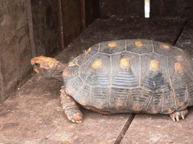 Oito animais são encaminhados ao Centro de Triagem de Araguaína, TO
