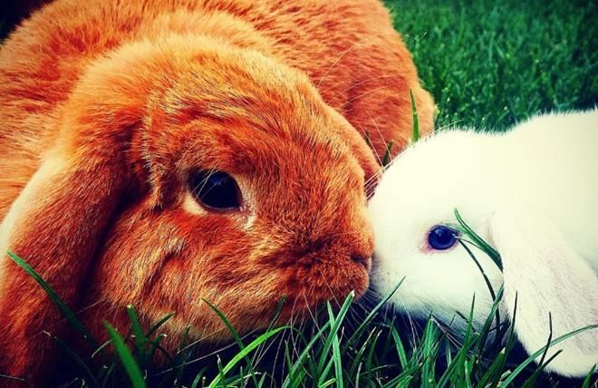 Taiwan proíbe testes de cosméticos em animais