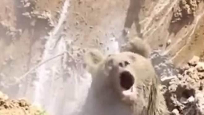 Operários encontram urso 'escondido' durante escavação na Turquia; vídeo