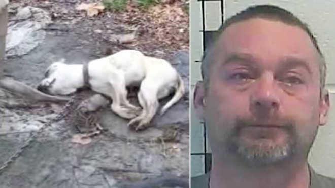 Este homem cruel amarrou seu cão no quintal e o deixou morrer de fome