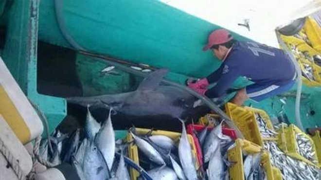 Grupo de pescadores abate golfinho no Vietnã e fotos causam comoção nas redes