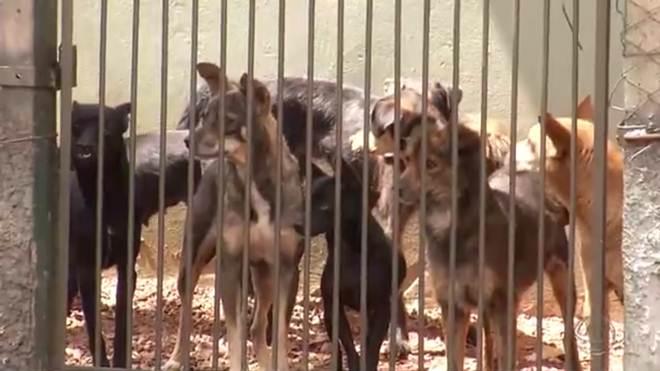 Aposentada muda de casa para cuidar de cerca de 140 cães adotados em MS
