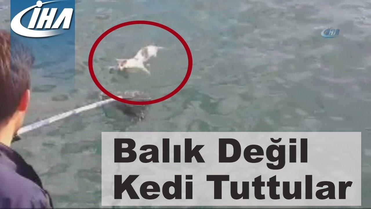 Gatinho é resgatado em alto mar após ficar horas à deriva