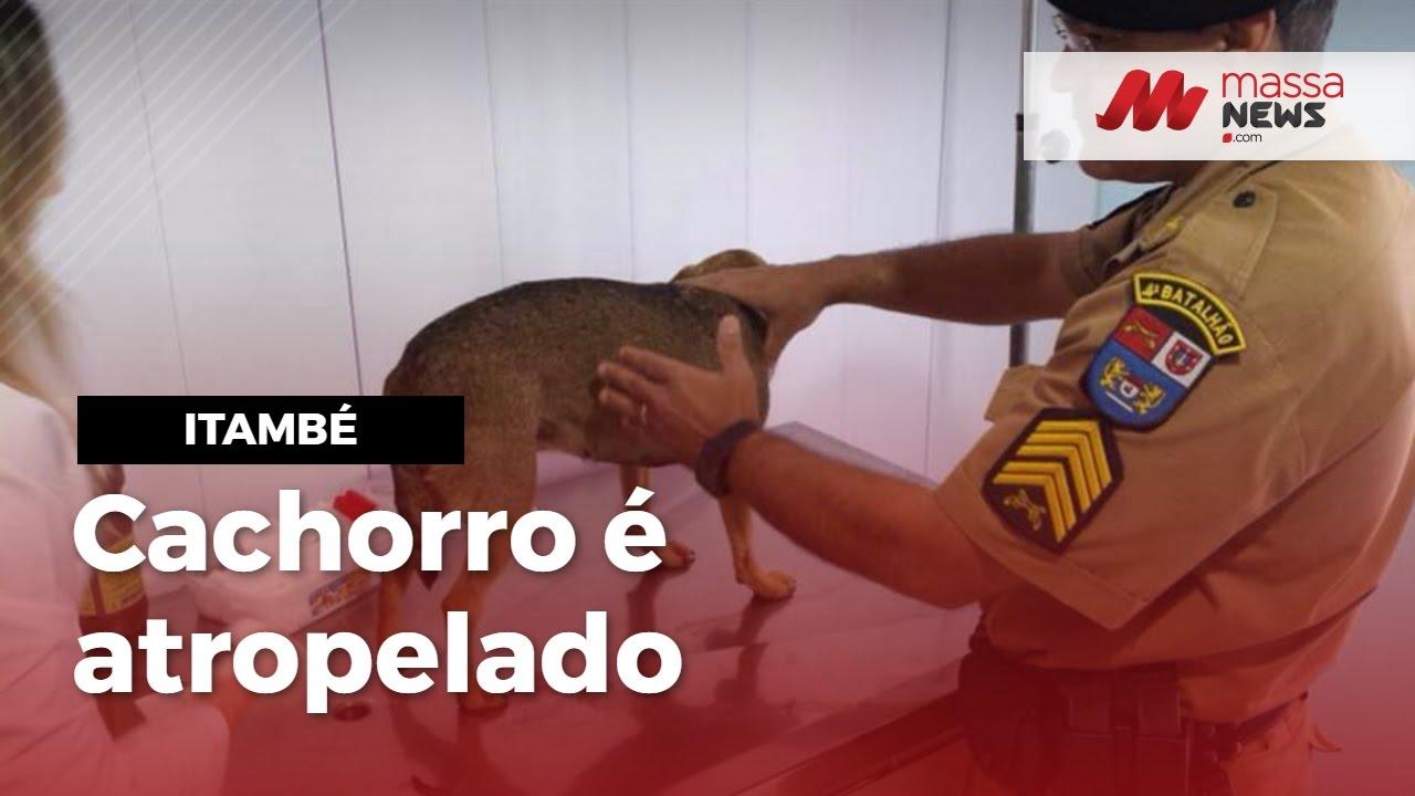 PM salva cachorro atropelado e outro atacado a machadadas em Itambé, PR