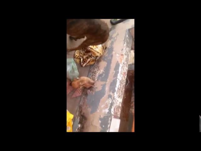 PM registra denúncia de maus-tratos a cães em residência em Uberaba, MG