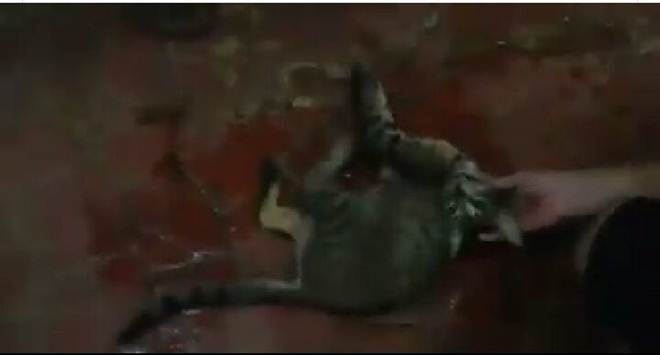 Crueldade: mulher espanca gato com cabo de vassoura até a morte no centro de Rio Branco, AC