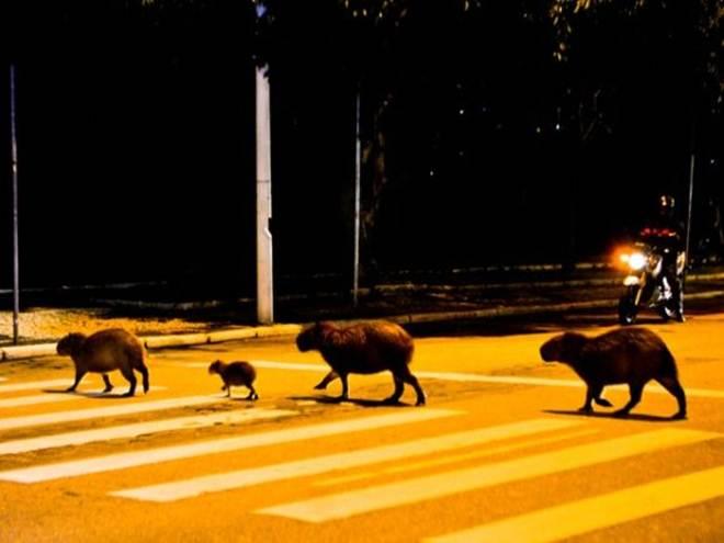 Acre adere ao Sistema Urubu pela proteção de animais silvestres