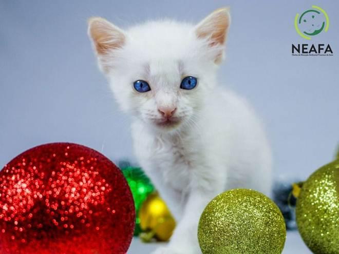 Publicitários realizam sessão de fotos dos cães e gatos do Neafa para campanha de Natal