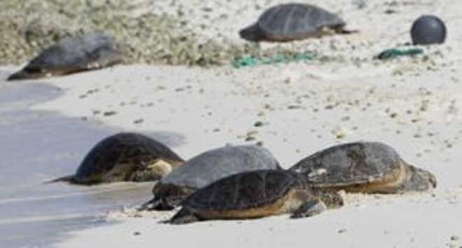 Tartaruga marinha é morta por dois pescadores na Ilha do Cabo, Angola