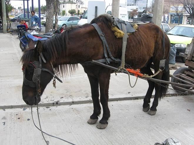 Paraná, na Argentina, proíbe veículos de tração animal