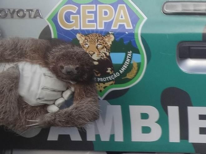 Bicho-preguiça e 14 tartarugas são resgatados em Salvador, BA