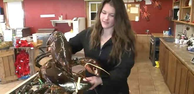 Vegano paga um dinheirão em lagosta gigante apenas para libertá-la