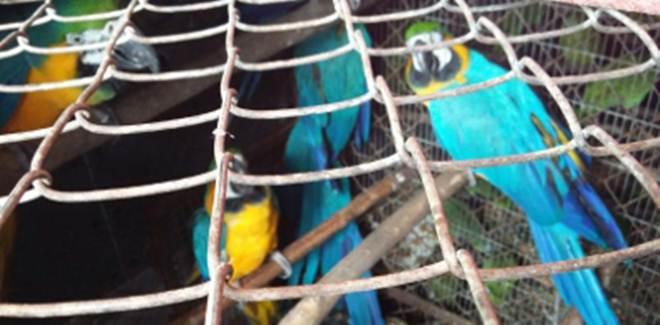 Semace e Ibama levam 122 animais silvestres para serem reinseridos à natureza em Tocantins