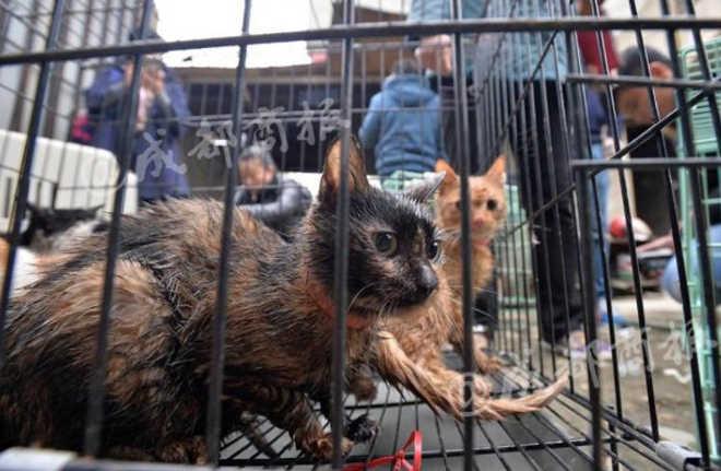 Falso defensor de gatos abatia animais e vendia como carne de coelho