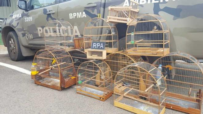 Pássaros da fauna silvestre são apreendidos em Ceilândia, DF