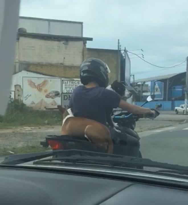 Motociclista é flagrada transportando cachorro na garupa da moto em Vila Velha (ES) Assista!