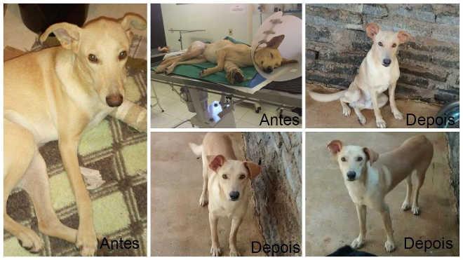 ONG Patas Carentes pode ter local próprio para acolher animais em Castelo, ES