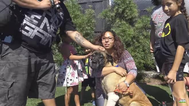 Cachorra machucada é resgatada de rio em Los Angeles e reunida com sua família – que é do Arizona!