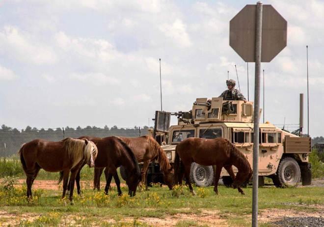 Ativistas dizem NÃO ao plano do exército de retirar cavalos selvagens da base de Lousiana, EUA