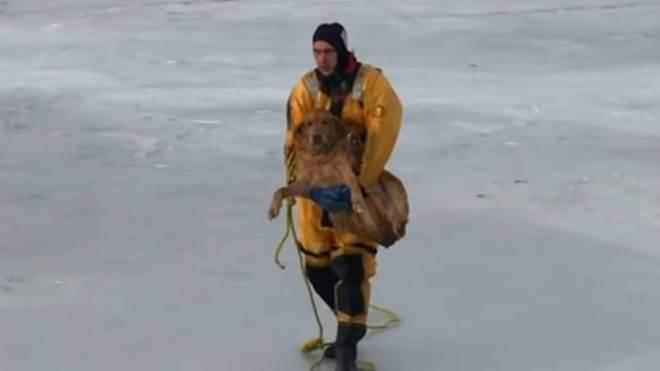 Bombeiros resgatam cachorro que ficou preso em lago congelado nos EUA