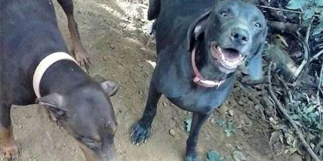 Homem mata os cachorros do vizinho por prazer, expõe as fotos e recebe o que merece por tanta maldade
