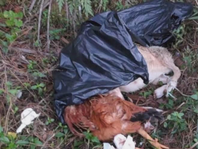 Animais decapitados para sacrifício religioso são descartados em propriedade particular nos EUA
